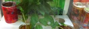 Банки с растениями (1 банка = 350 рублей)